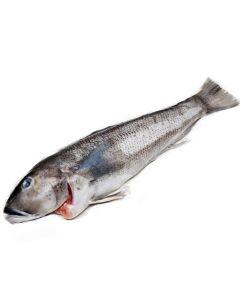 BAKALA WHOLE FISH - KG