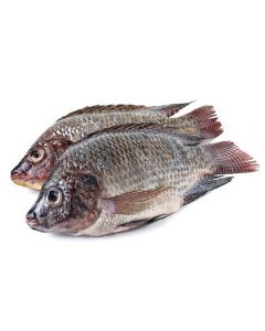 WHOLE GUTTED & SCALED FROZEN TILAPIA MUSHT - 300/400GR